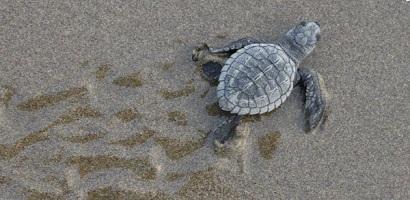 liberacion tortugas riviera nayarit5