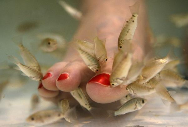Fish Pedicures