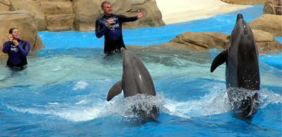Dolphinbanedfront