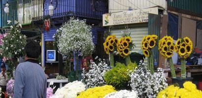 frente de flores