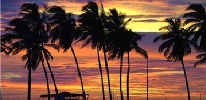Paradisefrontt