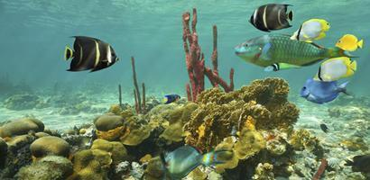 coralfrontt