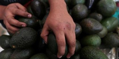 avocadofront