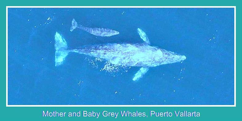 Ballena gris y bebé 2 pxls enmarcado VT