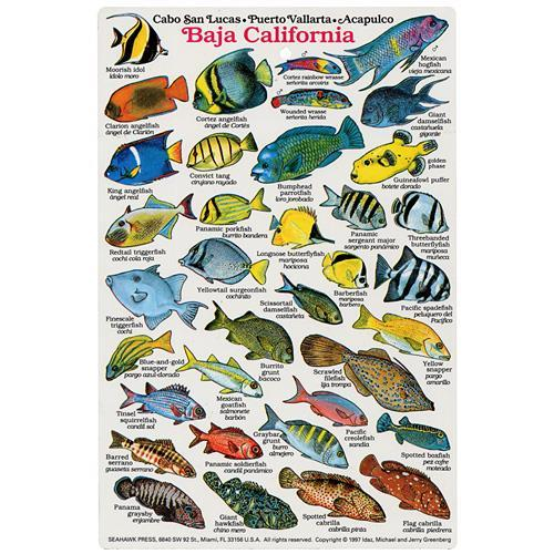 especies de pesca de fondo de PV