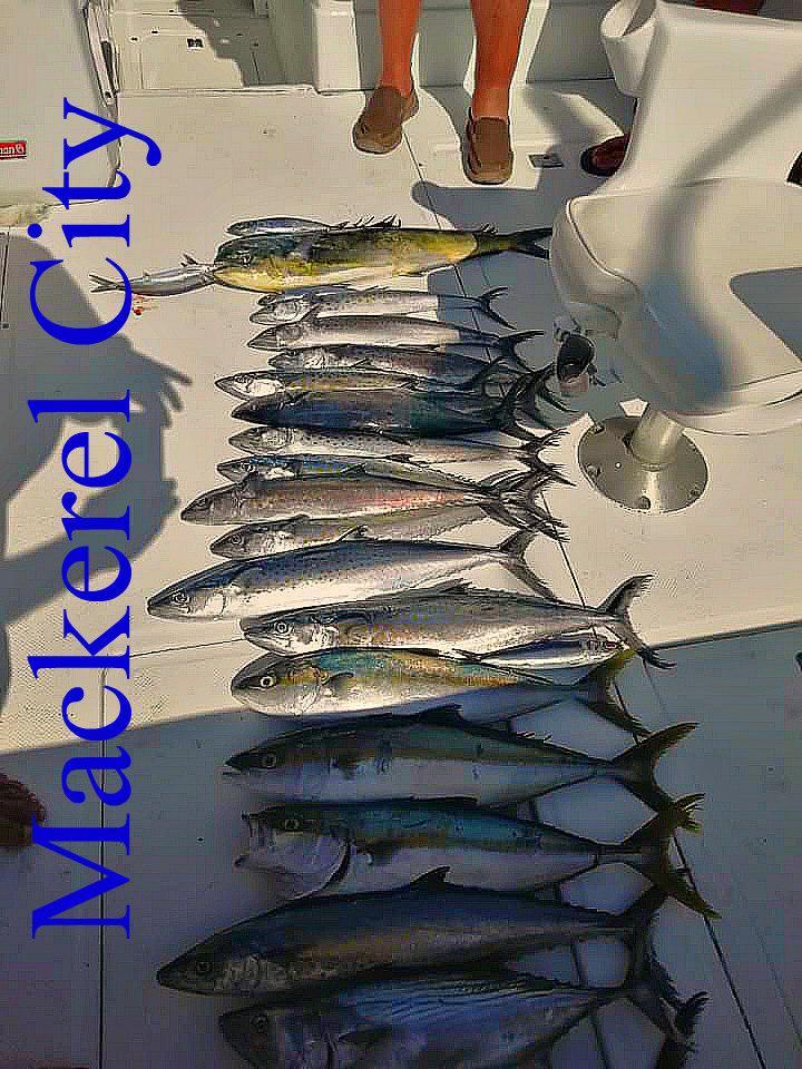 12 14 2020 Sierra Caballas en la bahía original 950 pxls Copia