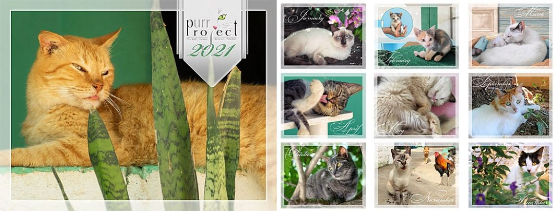 Purr Project