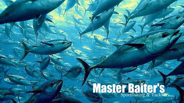 Master Baiter's Fish Pic of the Day: if you look closely, the Yellowfin Tuna are circling a bait ball, you can see in the background the Tuna are swimming in different directions... I love the depth of this photo... These Tuna in this picture for your knowledge are in the 100 lb Range...