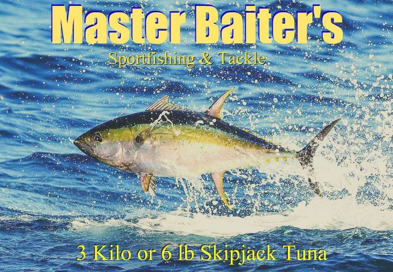 This is a picture of a Skipjack Tuna, they look exactly like larger yellowfin Tuna, but Skipjacks only hit six pounds or three kilos. Wonder ful bait and they're great tasting as well... I like to take them to Fajita Banana, cook the whole fish, score it naturally... leave the center pink... Que Rico... But first I like to start with a cold beer.. YeHa!